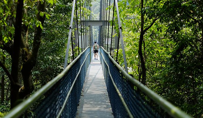 TreeTop Walk, MacRitchie Reservoir Park